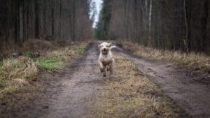 chien promenade
