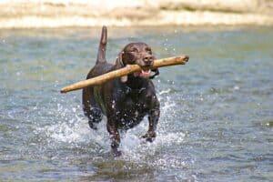 chien qui joue dans l'eau
