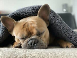 chien sieste couverture