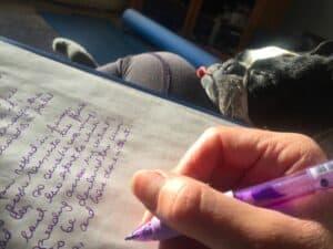 chien sieste télétravail