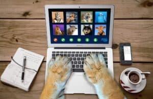 chien télétravail