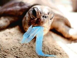 tortue avec plastique en bouche