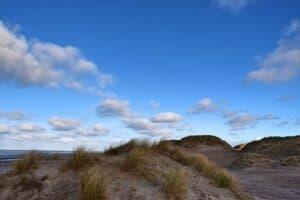 dune coxyde