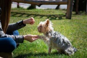 chien qui donne la patte à son maître