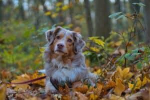 chien dans les bois
