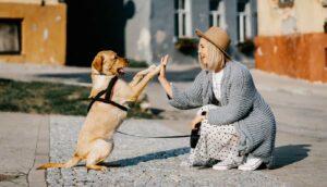chien qui fait le beau devant son maître