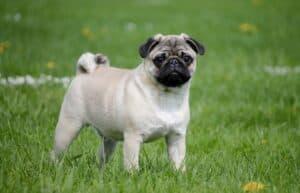 petit chien dans l'herbe