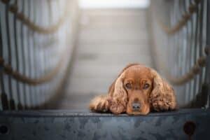 chien sur un pont