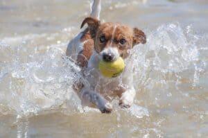 chien avec une balle dans l'eau