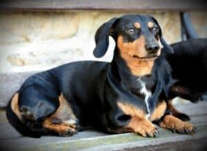 chien sur un banc
