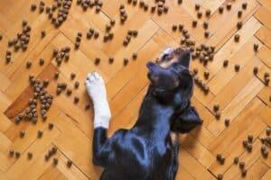 chien croquettes